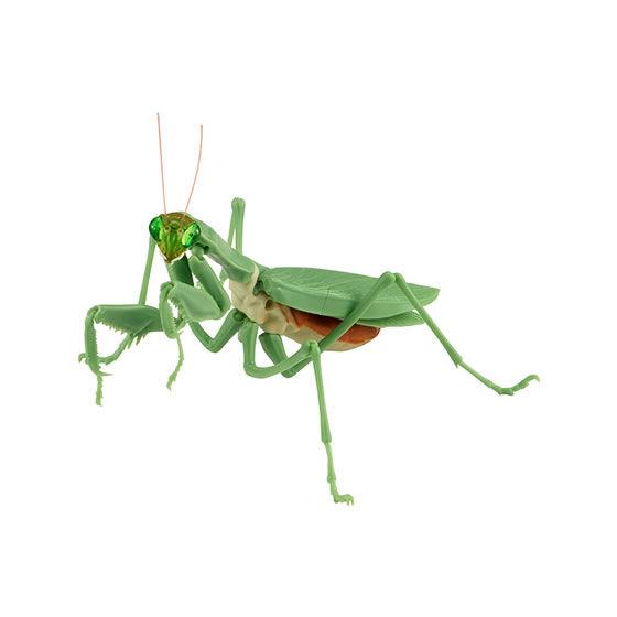 バンダイ 生き物カプセル かまきり おおかまきり(緑色型) 腹部通常版