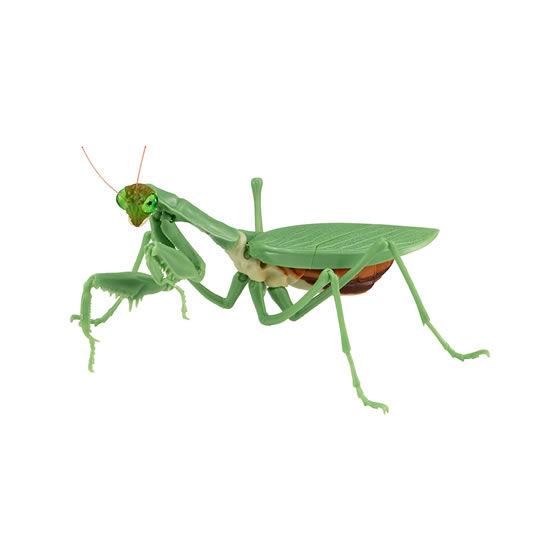 バンダイ 生き物カプセル かまきり おおかまきり(緑色型) 腹部膨張版