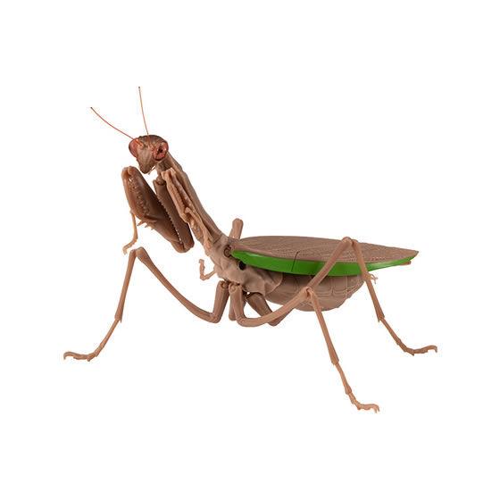 バンダイ 生き物カプセル かまきり おおかまきり(褐色型) 腹部膨張版